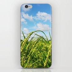 Ripe Rice iPhone Skin