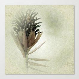 Bromeliad Flower Botanical Photograph Canvas Print