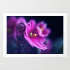 Raspberry Bloom no.2 Art Print