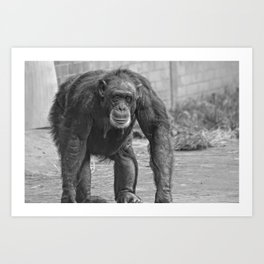 Cheeky Chimp Art Print