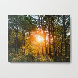Sun rising in the woods of North Carolina Metal Print