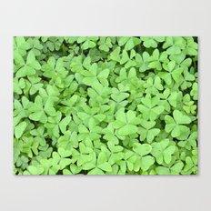Green Clovers Canvas Print