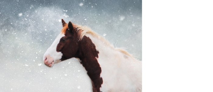 Paint Horse in the Snow Coffee Mug