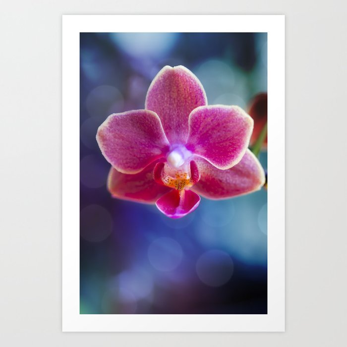 Evening Orchid Art Print