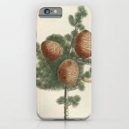 Botanical Pinecones iPhone Case