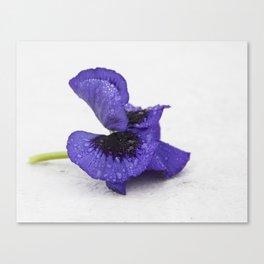 Violet spring dreams Canvas Print