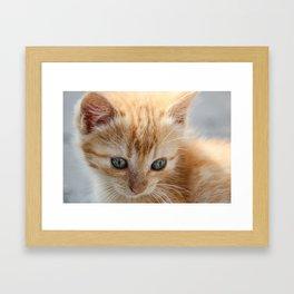 Macro of orange tabby kitten's head with intricate patterns in its beautiful eyes. Framed Art Print
