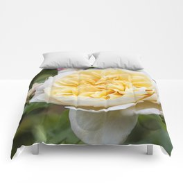 Old English rose Comforters