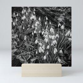 Wild woodland snowdrops Mini Art Print