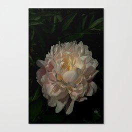 Peony 6 Canvas Print