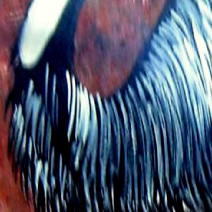 Aboriginal Art - Emu Leggings