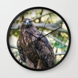 Golden eagle resting on a branch Wall Clock