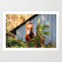 pony Art Prints featuring Pony by Linda Fields
