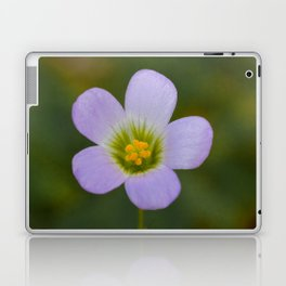 lilac oxalis close up Laptop & iPad Skin