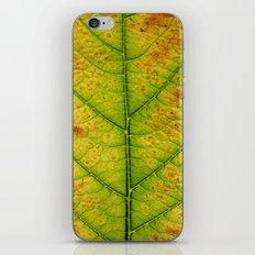 autumn leaf macro iPhone & iPod Skin