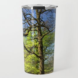 Spring Trees in Dunham Massey Park, England Travel Mug