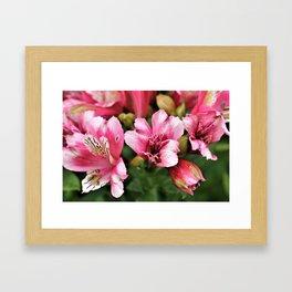 Passionate Pink Petals - Hope Framed Art Print