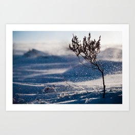 A little chilly. Art Print