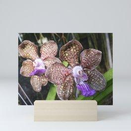 Mimi Palmer Orchid Mini Art Print