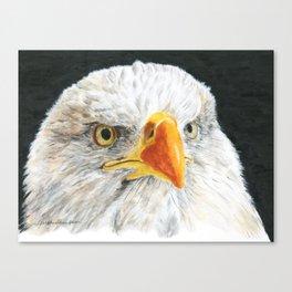 Bald Eagle by Teresa Thompson Canvas Print