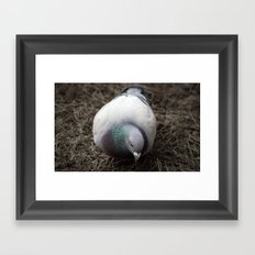 Pidge Framed Art Print