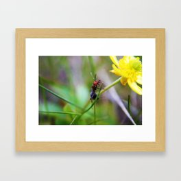 An Unlikely Friend Framed Art Print