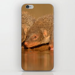 Thirsty mongoose iPhone Skin