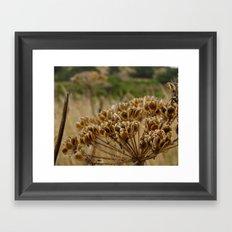 Navaro Bluffs, fall flowers II Framed Art Print