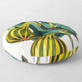 Fig plant, vintage illustration Floor Pillow