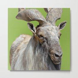 Serious Goat Metal Print