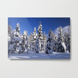 Snow covered trees in the forest. Winter day with blue sky. Metal Print