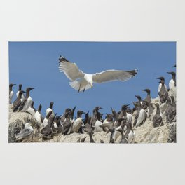 Seagull hovering over birds Rug