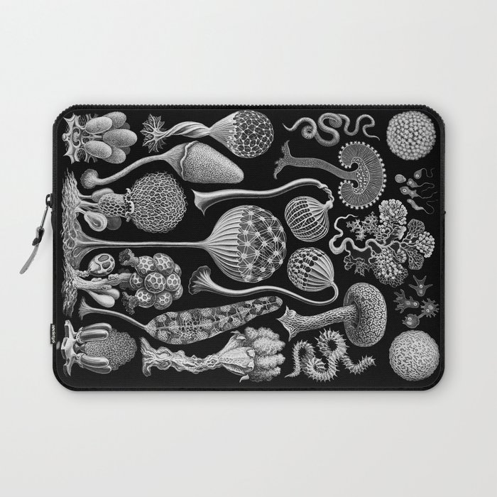 Slime Molds (Mycetozoa) by Ernst Haeckel Laptop Sleeve