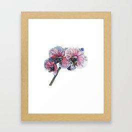 Stem of Orchids Framed Art Print