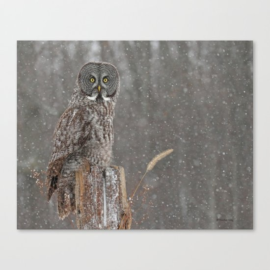 Flurries in the forecast Canvas Print
