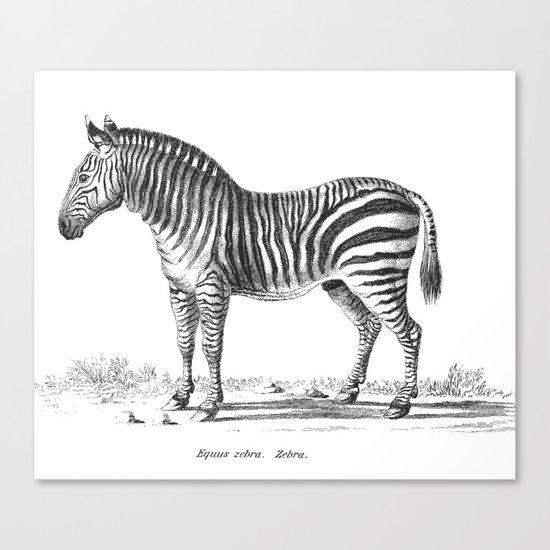 Zebra black and white retro drawing Canvas Print