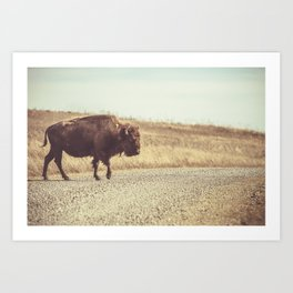 Bison Xing Buffalo Crossing Art Print