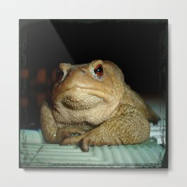 A Common Toad With Philosophical Disposition Metal Print
