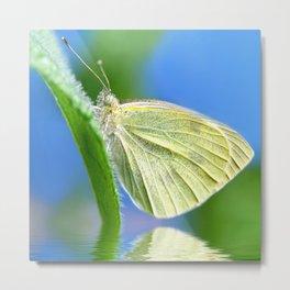 Butterfly 61 Metal Print