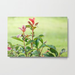 Greenery and red Metal Print