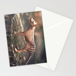 The Last Thylacine Stationery Cards