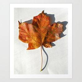 Red Leaf 1 Art Print