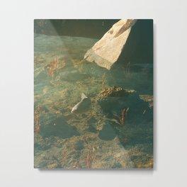 Day 0684 /// Fishy fish fishfish Metal Print