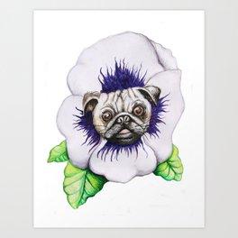 Pansy Pug Art Print