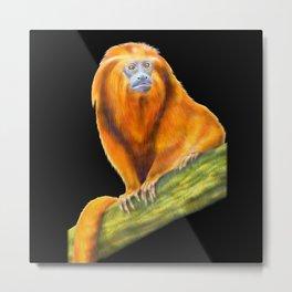 Golden Lion Tamarin Metal Print