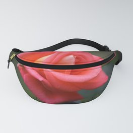 Red rose on a dark background Fanny Pack