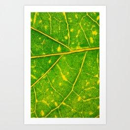Macro Leaf 3 Art Print