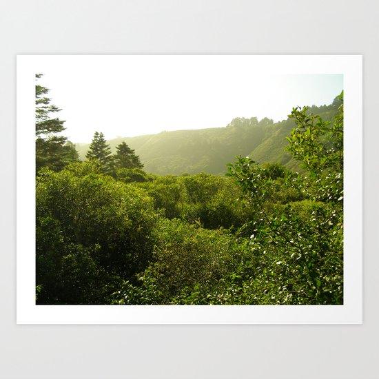 California Coast Trees I Art Print