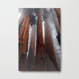 Woodley Forest Metal Print