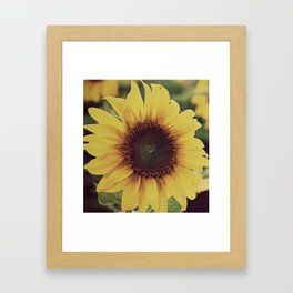 sunflower beauty no. 4 Framed Art Print